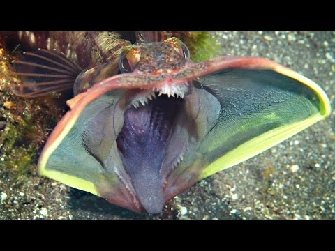 10 of the MOST AMAZING SEA CREATURES ever discovered!