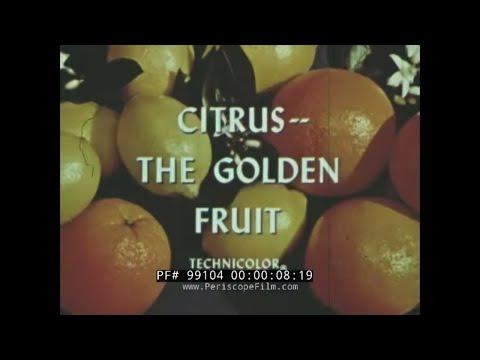 """""""-citrus-the-golden-fruit""""-1950s-sunkist-orange-growers-promo-film-california-citrus-farms-99104"""