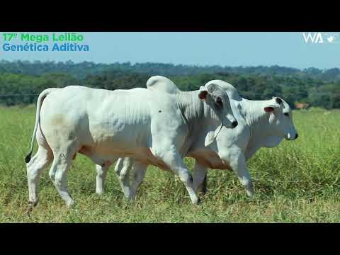 LOTE 156 - DUPLO - REMC A 2021, REMC A 2060 - 17º Mega Leilão Genética Aditiva 2020
