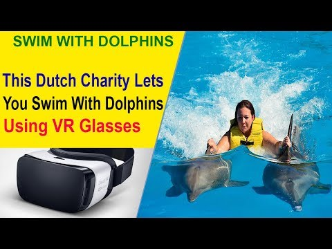 Swimming with Wild Dolphins For Disable People Is Possible