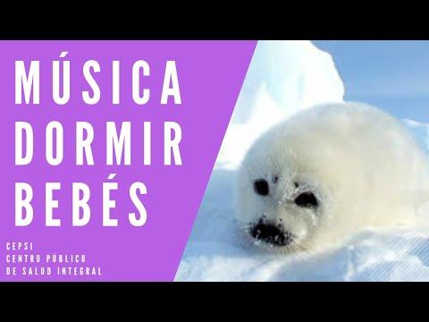 ♫ MUSICA PARA DORMIR  SONIDO DE BEBE DE FOCA .MUSIC BABY SEAL ♫