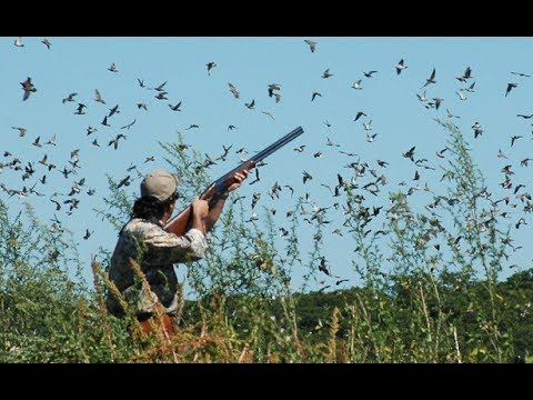 Dove Hunting In Argentina.