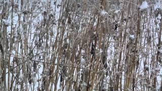 2012年12月 雪の中の探索 ルナ.