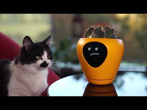 This Smart Planter Uses Facial Expressions To Make Sure Your Plants Are Always Happy
