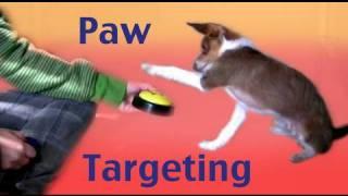 Dog Tricks Training Tutorial: Paw Targeting