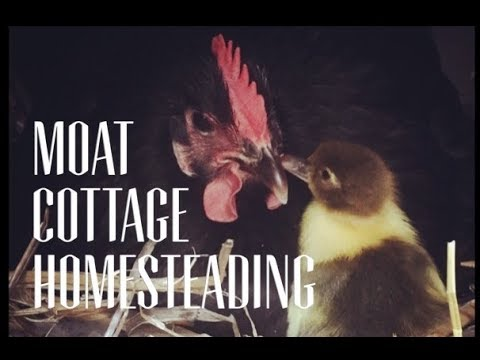 Homesteading in Australia at Moat Cottage