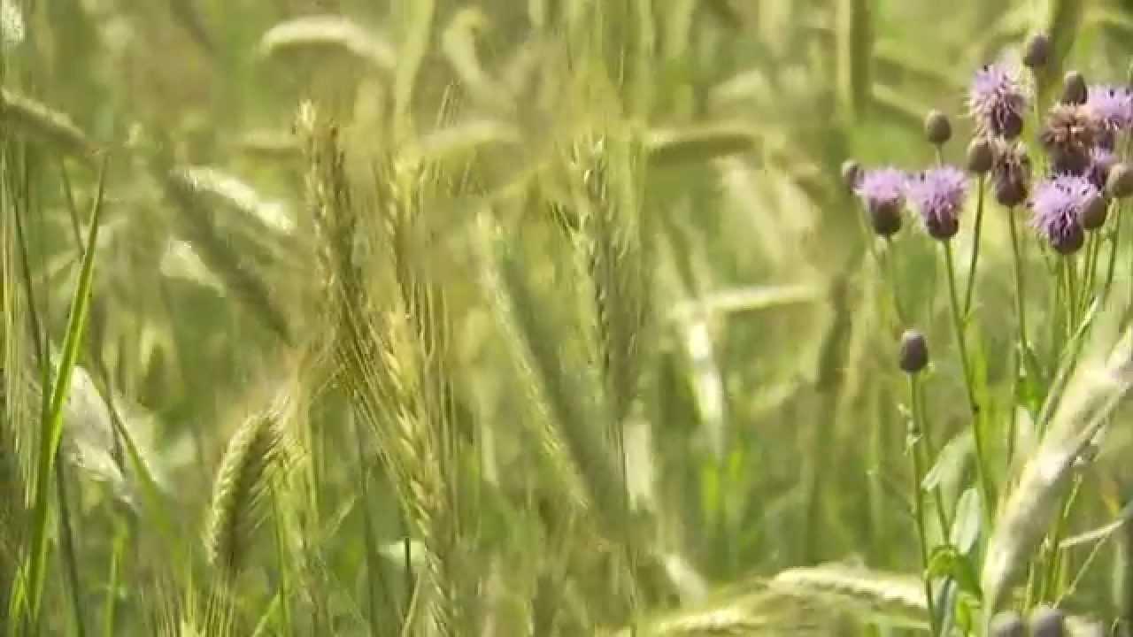 Landwirtschaft In Bayern