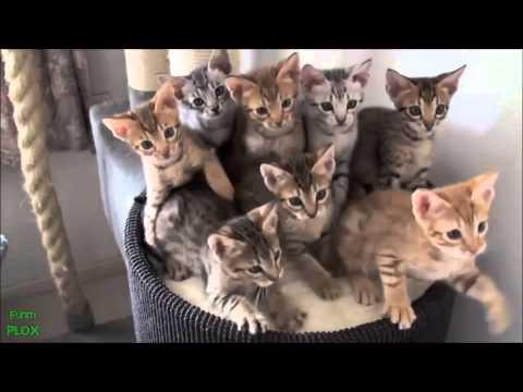 Legviccesebb állat videók gyűjteménye! 2014 HD letöltés