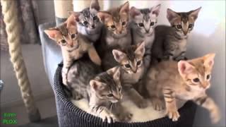 Legviccesebb állat videók gyűjteménye! 2014 HD
