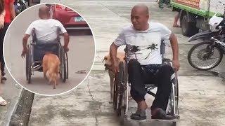 今そこにある感動。オートバイ事故で半身不随になった飼い主の車椅子を懸命に押す犬(フィリピン)