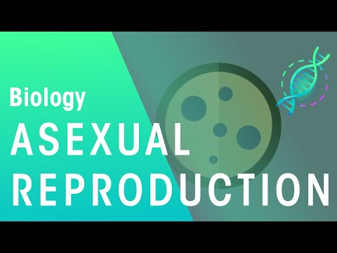 What Is Asexual Reproduction | Biology for All | FuseSchool