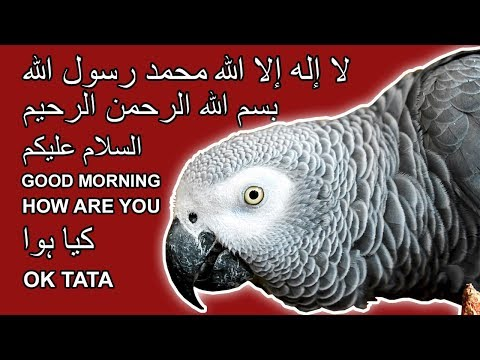 Kya baat hai iss African Grey Parrot ki | SUBHANALLAH | Bolne Wala Tota | Talking Parrot