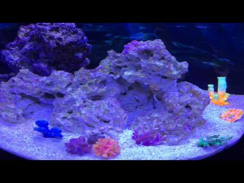 Coralline algae growth week 8