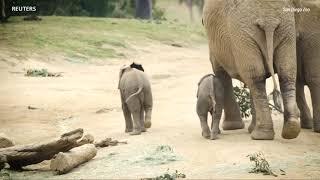 Новая жизнь слонов