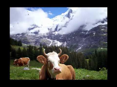 Berner Oberland Anthem (Vogellisi)