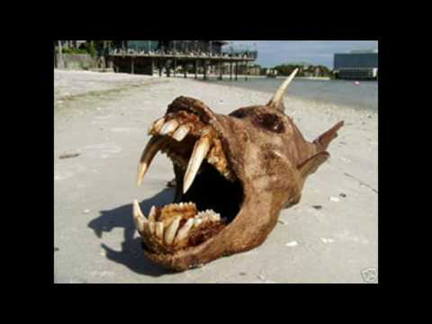 The Deadly Secrets of Plum Island