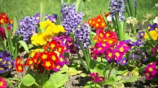 Kiato-Flowers