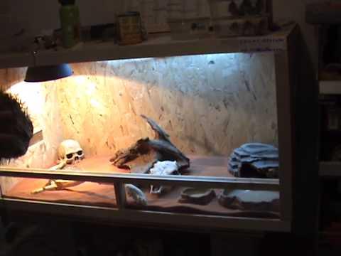 Amenagement Du Terrarium Pour Pogona Vitticepts Youtube