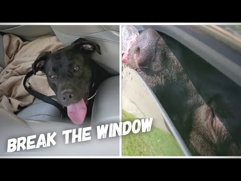 Against The Law, Man Rescue Dying Dog Left In A Hot Car By Breaking The Window