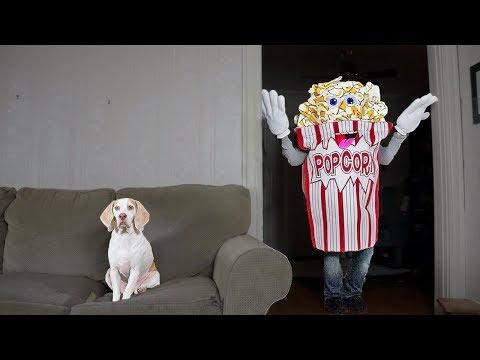 Funny Dog vs Giant Popcorn Man Prank: Funny Dog Maymo