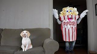 Funny Dog vs Giant Popcorn Man Prank Funny Dog Maymo