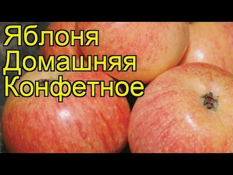 Вопрос: На какие сорта привить яблони Легенда и Конфетное?