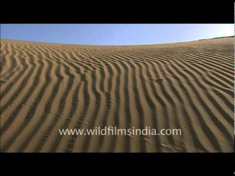 Sam Sand dunes in De