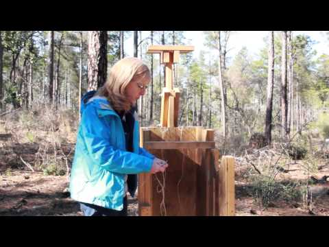 Pine Straw Baler Demonstration