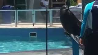 "seal singing ""crazy"" by gnarls barkley (full video)"