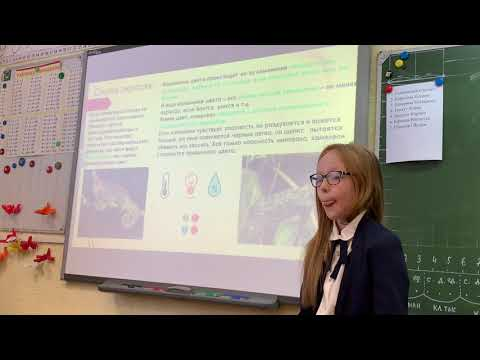 Юркина Виолетта - Школа. 2 класс. Защита проекта