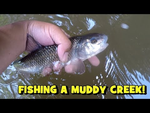 ACCIDENT On The MUDDY CREEK?! PUCKER FACTOR Went In FULL MODE!! (2000 Fishes Milestone - 2019)