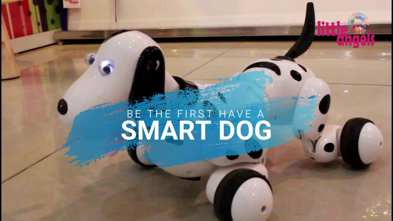 SMART-DOG l LITTLE ANGELS BD l 2019