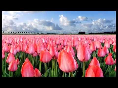 The world paints paints-flowers
