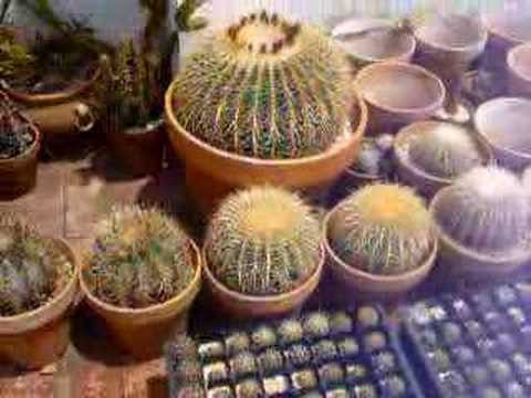 Yamal Cactus Mayo 2008