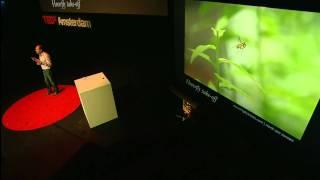TEDxAmsterdam 2011 - David Lentink