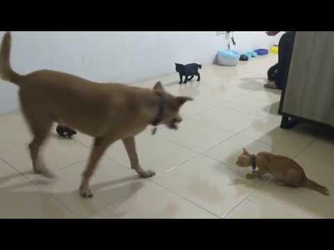 Playtime : Baron + Chikodet vs Robot Tikus