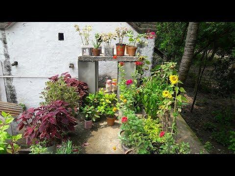 #2 Garden Overview, summer flower plant, sunflower plant,marigold,adenium plant,money plant