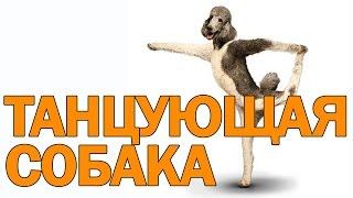 Собака танцует рядом с мальчиком