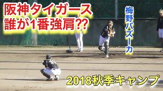 阪神タイガース安芸秋季キャンプ2018 捕手で、誰が一番強肩!? 参...
