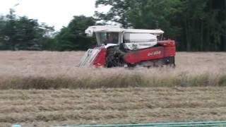 小麦刈り取り作業中 倒伏しているので一方向刈り取り移動中の激走.