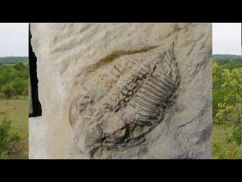 Trilobite fossil: Huntonia preparation sequence from the devonian of Oklahoma