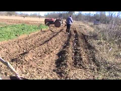 Planting Sugarcane - YouTube