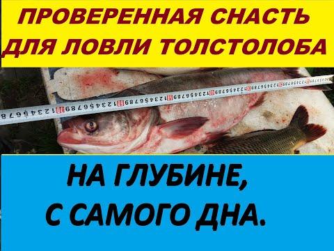 Самая уловистая оснастка для ловли толстолобика со дна.Ловля на технопланктон  или гидропланктон.