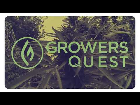 "Swami Select's Swami Chaitanya Featured on Green Flower Media's Series ""Grower's Quest"""