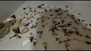 РАСКОПКИ В МАНГИСТАУ - ОКЕАНИЧЕСКИЕ ЖИВОТНЫЕ  КОТОРЫЕ ЖИЛИ 40 МИЛЛИОНОВ ЛЕТ НАЗАД