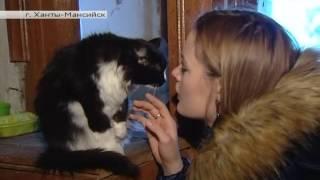 01.02.17 Черно-белая кошка ищет хозяина. Автор - Мария Пшеничная