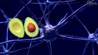 Нервната система: особености при чистене на тялото