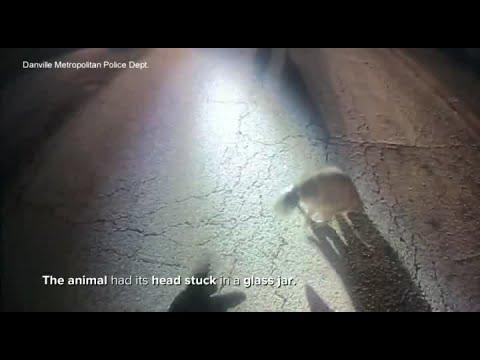 The Woody Show - Raccoon News: Raccoon Gets Head Stuck in Jar (Again)