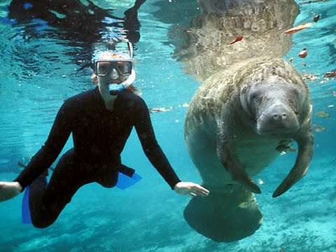 The Best Of  Blue spring State Park!!!! Swimming with the Manatees