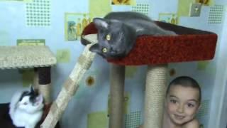 Когтеточка с домиком для котят и кошки